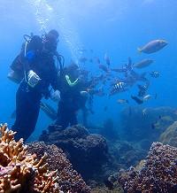 南勇浮潛-體驗潛水